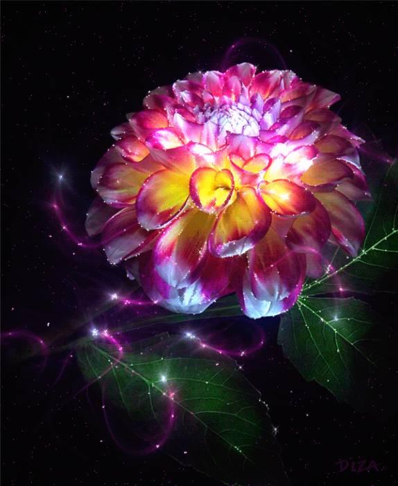 картинки красивые цветы анимация: